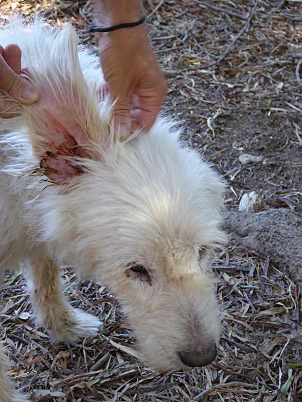 Pfote drauf-Tierhilfe e.V. Trier, Tierschutz im Ausland, Insel Kos