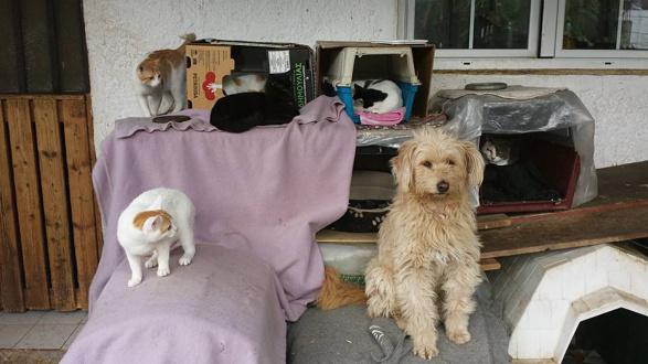 Pfote drauf-Tierhilfe e.V. Trier, Tierschutz Insel Kos