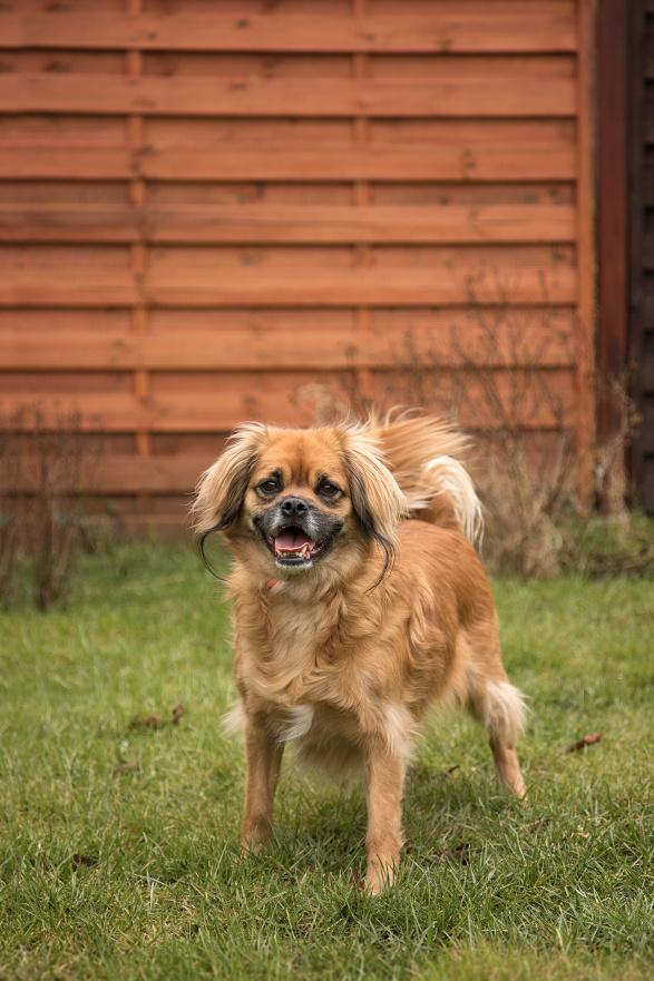 Pfote drauf-Tierhilfe e.V.,Hund, weiblich, jung, verträglich