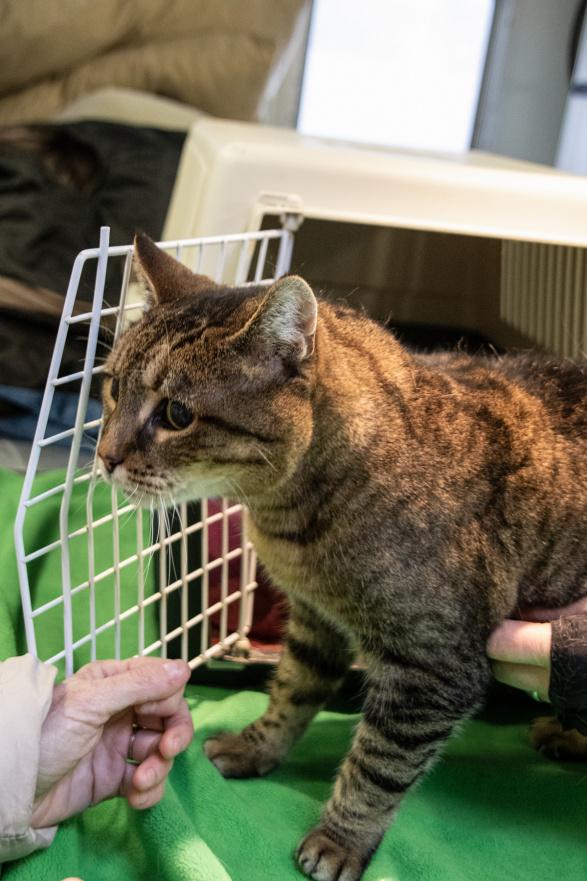 """Pfote drauf-Tierhilfe e.V. Trier, """"Not-Felle"""" suchen ein Zuhause!, Katze, Kira, 10 Jahre,blind, kinder- und hundeverträglich"""