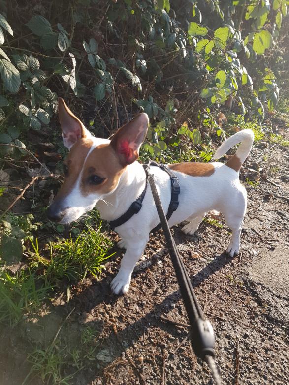 Pfote drauf-Tierhilfe e.V. Trier, Hund, glücklich vermittelt