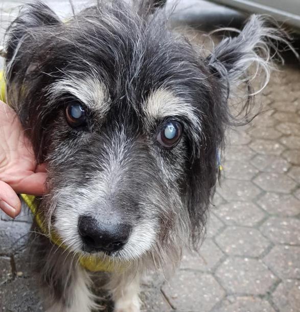 Pfote drauf-Tierhilfe e.V. Trier, Pate gesucht, Bonnie, blind, Diabetes